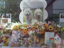 ペットの森ブログ-DCIM0705.JPG