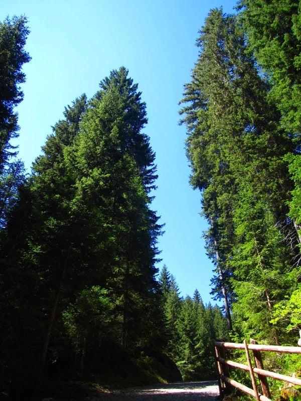エメラルドグリーンのきれいな湖: ドロミテでキャンプ☆感動的なエメラルドグリーン