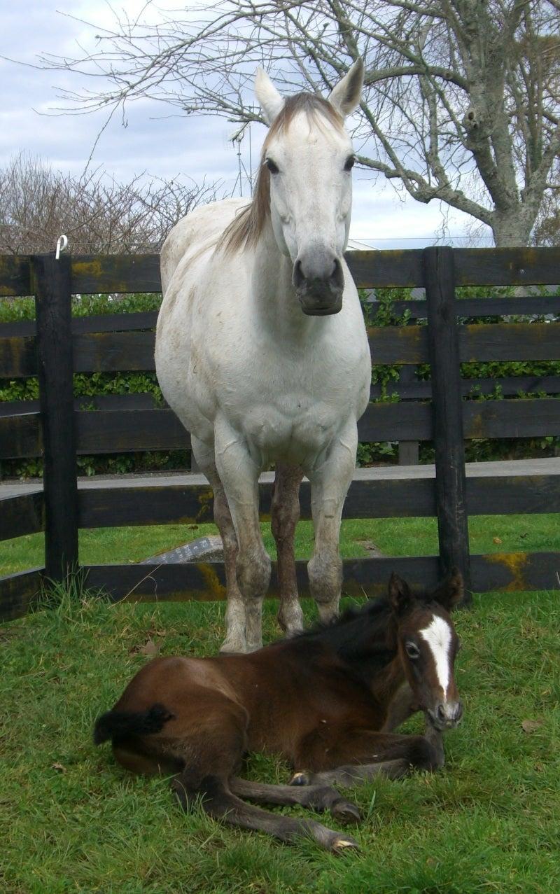 あし毛から生まれた仔馬 | ニュージーランド奮闘記