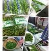 第11回野菜ソムリエサミット ☆枝豆☆の画像