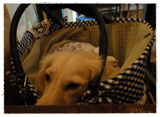 旅犬Lani&Leaのほほん風船記-Kaffa Clinic