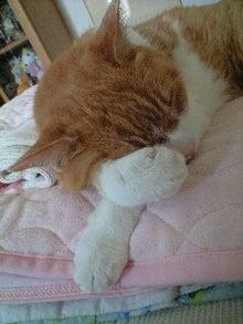 ずれずれブログ…湘南で猫と暮らせば…-120829_1515~0001.jpg