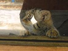 鴻巣の整体院ささき 整体よもやま話-子猫2