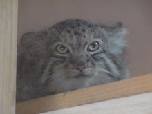 鴻巣の整体院ささき 整体よもやま話-子猫5