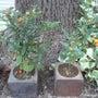 夏の終わり~花壇の色…