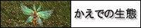 花楓さんバナァ