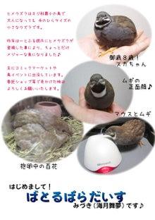 $絵日記ブログ・姫うずらまみれ-mof-kita2メッセージ