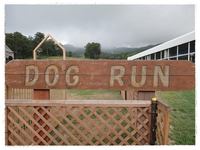 旅犬Lani&Leaのほほん風船記-たんばらラベンダーパーク ドッグラン