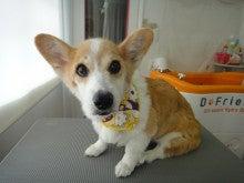 Dog Place-T・J (ドッグプレース ティージェイ)