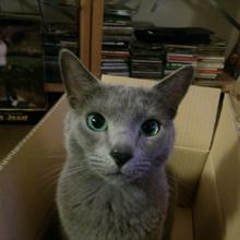 tabiosannomamaのブログ-銀ちゃん