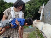 馬を愛する男のブログ Ebosikogen Horse Park-やぎさんと対決