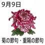 9月9日《重陽》~菊…