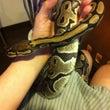 ヘビがきた。