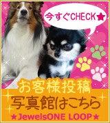 $★Jewels ONE★日記☆