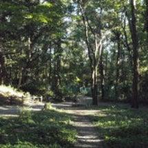 森林浴で心の開放を