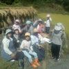 ∵ 16日 稲刈の画像
