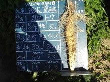 大和芋 シゲオ農園-8