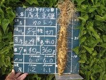 大和芋 シゲオ農園-9月