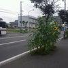 暑い朝だよσ(^◇^;)の画像