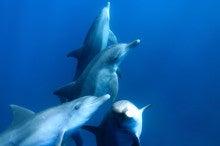 イルカと泳ぐ旅