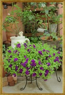 K's Garden & Photograph