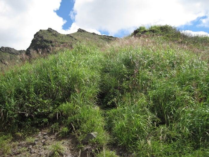 歩き人ふみの徒歩世界旅行 日本・台湾編-草に埋もれた道