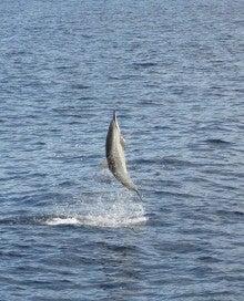 跳ねる 理由 魚