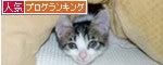 人気ブログランキング【猫ブログ】