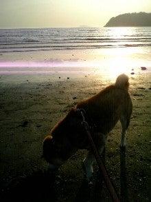 kokoroのブログ-日射し…犬