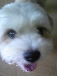 $ばぶひなママがお届けする 愛犬そっくりな羊毛ふわふわワンちゃん お花とコラボ           ~アトリエ 花だより~-DVC00028.jpg