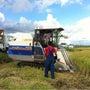 【体験農園】稲刈りの…