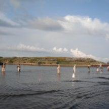 浜益川釣獲調査