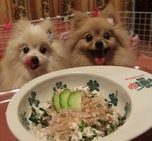 $【大阪・神戸】ペットに手作り食倶楽部 ★ 阪神間でペット食育講座-夏の名残7