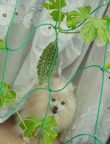 $【大阪・神戸】ペットに手作り食倶楽部 ★ 阪神間でペット食育講座-夏の名残2
