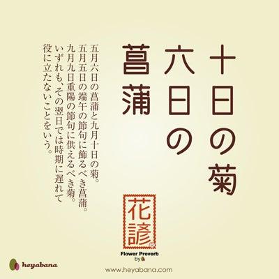 ハナペディア【十日の菊六日の菖...
