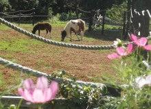 馬を愛する男のブログ Ebosikogen Horse Park-ポニーの放馬風景1