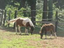 馬を愛する男のブログ Ebosikogen Horse Park-ポニーの放馬風景2