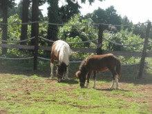 馬を愛する男のブログ Ebosikogen Horse Park-ポニーの放馬風景3