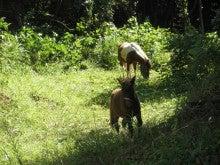 馬を愛する男のブログ Ebosikogen Horse Park-ポニーの放馬風景4