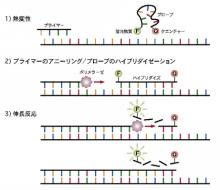 $東京マイクロスコープ顕微鏡歯科☆オーラルハイジニストnaomi-蛍光プローブ法