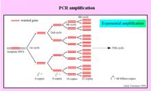 東京マイクロスコープ顕微鏡歯科☆オーラルハイジニストnaomi-PCRの増幅