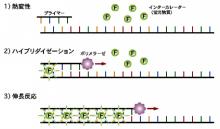 東京マイクロスコープ顕微鏡歯科☆オーラルハイジニストnaomi-インターカレーター法