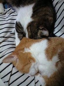 ずれずれブログ…湘南で猫と暮らせば…-120928_2258~0001.jpg