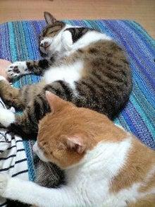 ずれずれブログ…湘南で猫と暮らせば…-120929_0022~0001.jpg