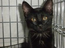 社会猫・人と猫の共生を図る対策会議 公式ブログ