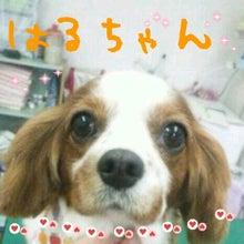Poodock♪ownerのママトリ日記2-2012-09-29_23.52.22.jpg