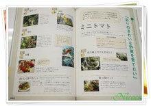 大好き☆ベランダ菜園-ベランダ菜園セラピー