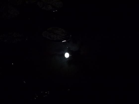 はすのやにっき-御池(禊池)に映る月