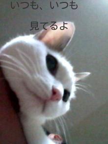 ホムちゃん メモリアル