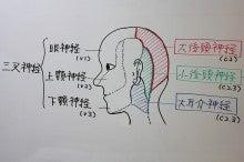 ツボ 後頭 神経痛 ブログを更新しました 『片頭痛じゃない!!後頭神経痛の特徴!!』(2021年03月05日